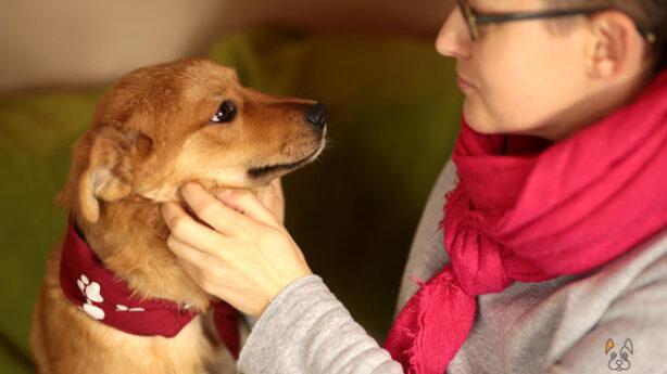 Podopieczny fundacji dla psów | Psy do adopcji